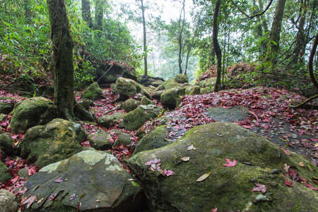 Autumn creek  with yellow maple trees and foliage on rocks in forest with tree branches at Phu Luang Wildlife Sanctuary in Loei, Thailand