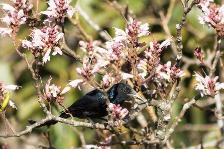 Back bird phylloscopus on wildflowers full bloom in nature on Phu Luang Wildlife Sanctuary