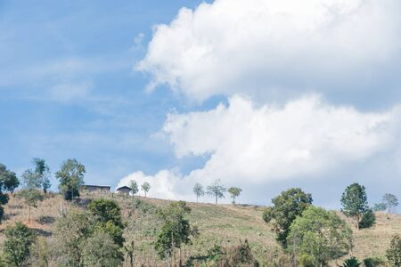 agriculture in a deforested landscape on a hill