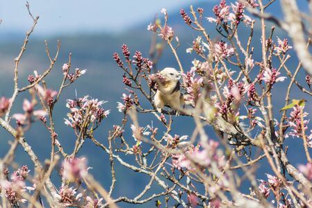 squirrel on wildflowers full bloom in nature on Phu Luang Wildlife Sanctuary