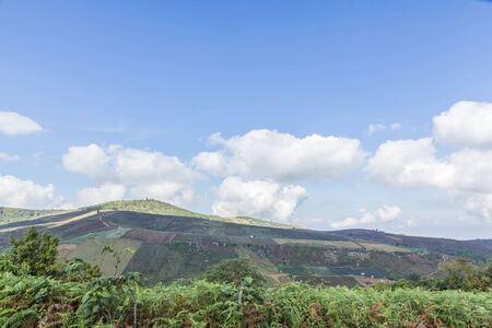 deforested: agriculture in a deforested landscape on a hill