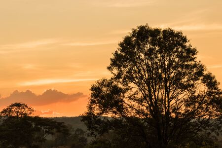 tree silhouette  on sunset beauty on view point Stock Photo