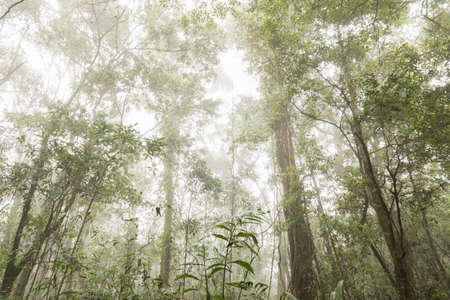 green trees with fog background in forest Stock Photo