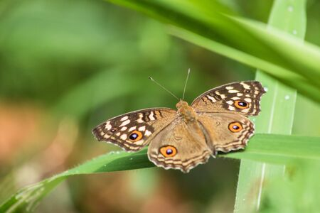 small butterfly on leaf in natural