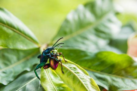Macro shot of insect Banco de Imagens
