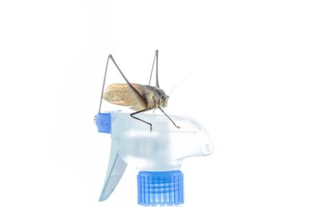 Grasshopper sitting on water Injection bottle with white background, moving slowly.