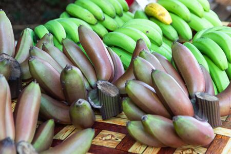 Purple  banana fruits of an exotic tropical banana on a branch among the leaves. stack of red pink purple bananas