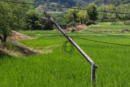 The storm caused severe damage to Danger electric poles broken and falling tilt  in the middle of the rice field 写真素材