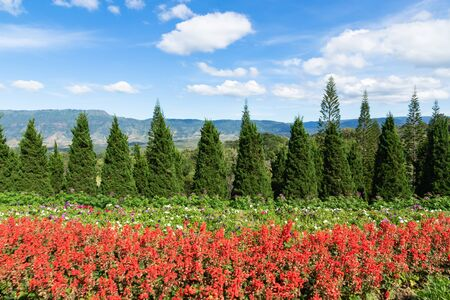 red flower on hill background and blu sky