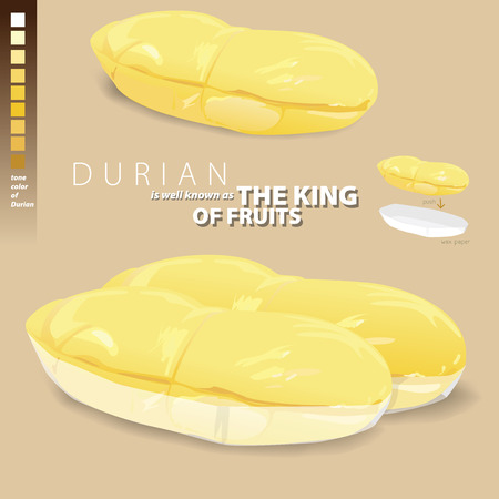 Durian is a fragrant and sweet, and is well known as the king of fruits. Illustrate vector present Durian in paper pack for sale.
