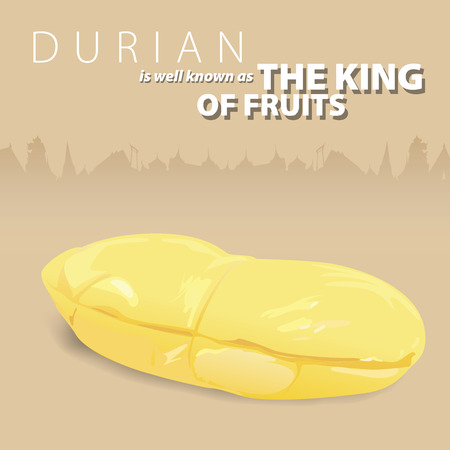 fragrant: Durian is a fragrant and sweet, and is well known as the king of fruits. Illustrate vector present Durian front of siluated graphic Thailand architech. Illustration