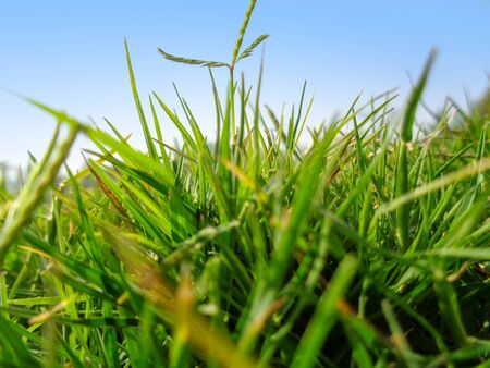 Close-up of grass in the field macro