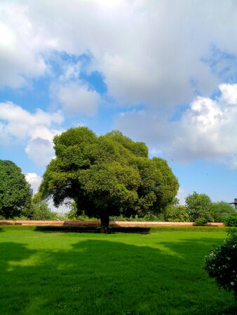 Trees in the garden, blue skies and greenery Imagens