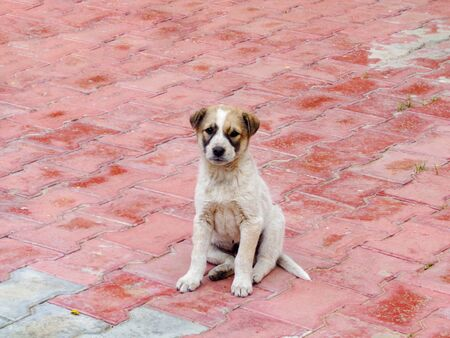Stray dog cute puppy seating in the lawn looking at camera Foto de archivo