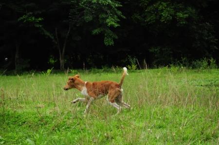 perro corriendo: perro corriendo en la tierra