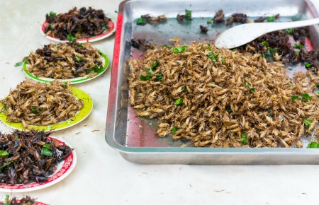 Fried insects Stock Photo - 19604960