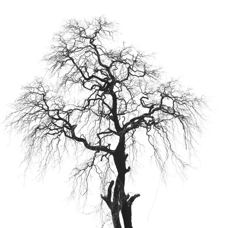 Árvore escura em isoleted