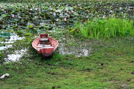 Old ship in the lotus pond photo