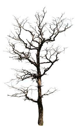 Dead trees Dried. Dried dead trees