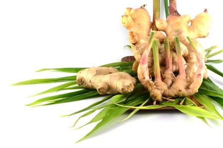 fresh ginger: fresh ginger isolated