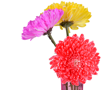 mix colorful chrysanthemum photo