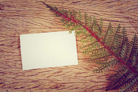 green leaves and blank card  photo
