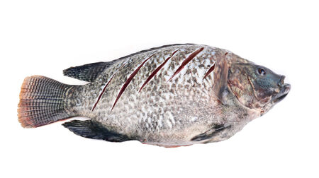 Raw Tilapia for cooking photo