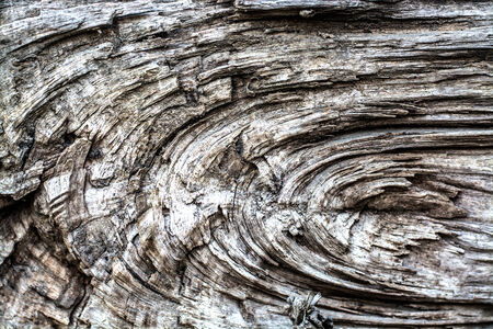 Wood texture of cutted tree trunk Stockfoto