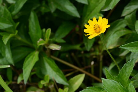 fragile delicate yellow flower photo
