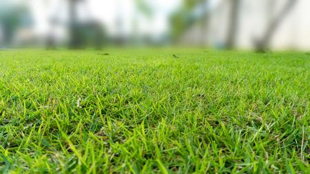 green grass lawn court in the garden view