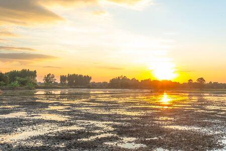 sunset worm light shade with asia farm rice grown up Reklamní fotografie
