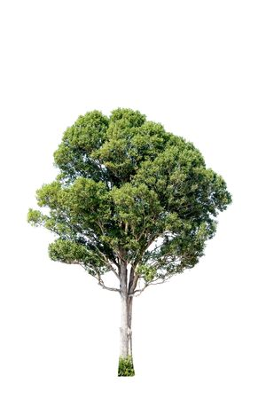 Tree alone with leaf on isolate white background Standard-Bild - 143079973