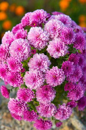 ramo flores: ramo Flores