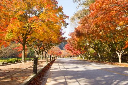 The colors of autumn in korea photo