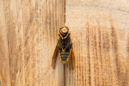 dead wasp on background