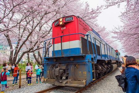 JINHAE, KOREA - 4. APRIL: Festival Jinhae Gunhangje ist das größte Kirschblütenfestival in Korea. Touristen, die Fotos der schönen Landschaft um Jinhae, Korea 4,2015 im April machen.