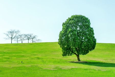 tronco: Solo árbol, árbol en el Parque Olímpico. Foto de archivo