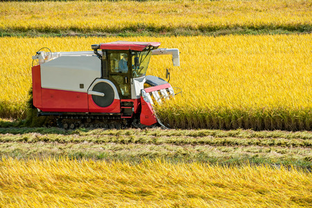 harvest time: Combine harvester in a rice field during harvest time. Stock Photo