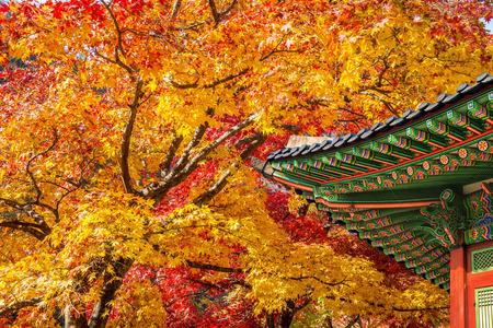한국의 가을 Gyeongbukgung의 지붕과 단풍 나무.