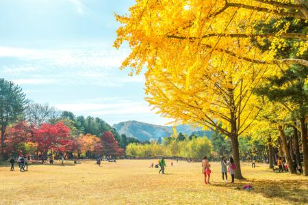 NAMI-EILAND, KOREA - OCT 25: Toeristen die foto's van het mooie landschap in de herfst nemen rond het Eiland van Nami. Foto op 25,2015 Oktober in Seoel, Zuid-Korea wordt genomen dat. Redactioneel