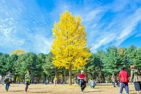 NAMI ISLAND,KOREA - OCT 25: Tourists taking photos of the beautiful scenery in autumn around Nami Island. Photo taken on October 25,2015 in seoul,South Korea.