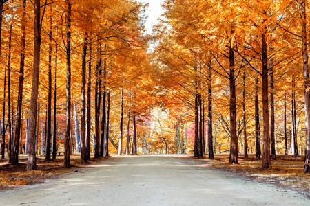 Herfstbomen in Nami eiland, Korea.