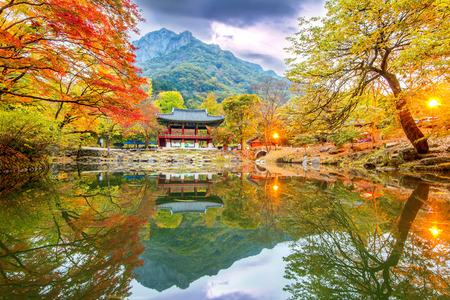 내장산 공원 가을, 한국.
