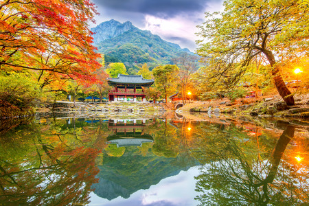 Herfst in Naejangsan Park, korea.