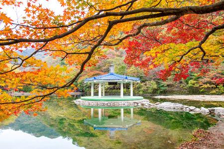 Autumn in Naejangsan Park,korea. Standard-Bild