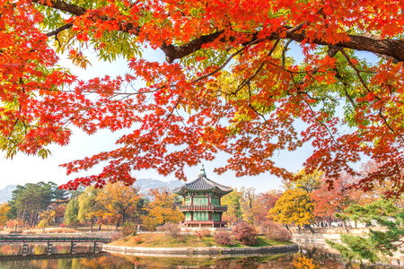 south park: Gyeongbukgung and Maple tree in autumn in korea.