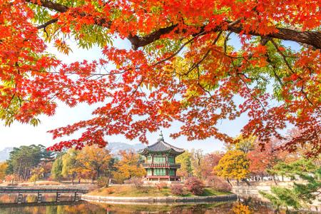Gyeongbukgung en de boom van de esdoorn in de herfst in Korea.