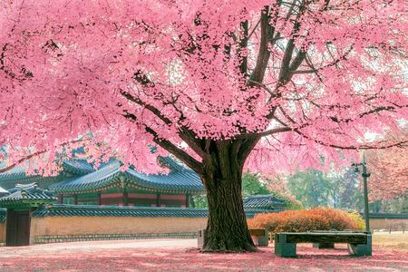 핑크 트리.