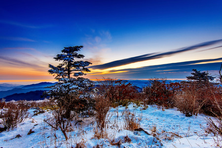 winter sunrise: Sunrise with silhouettes of trees at Deogyusan mountains in winter,South Korea.