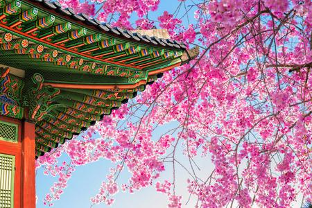 봄 사원의 지붕 벚꽃.